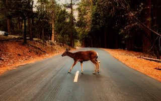 Deer Season Safety Driving Tips | Davis paint and collision auto center